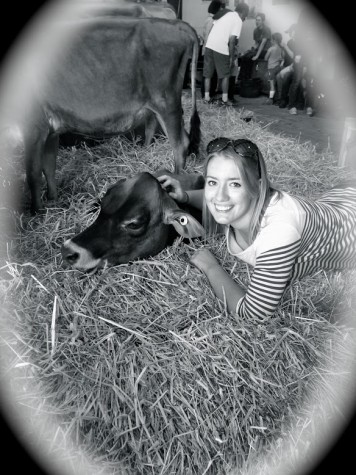 "Here, Coginchaug senior Erin Smith poses with Tequila Twilight of Deerfield Farm. ""I have always loved seeing the cows at the fair, ever since I was a little kid."" said Erin. The cows are a major attraction at the Durham Fair, despite the smelly barn and crowded quarters."
