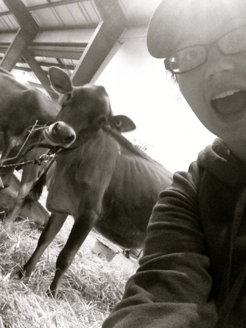 Tequila Twilight of Deerfield Farm in Durham, and I took a #cowselfie.